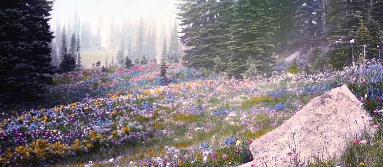 Wildflowers, hand-colored lantern slide. OHS Research Library, Frank Branch Riley Collection, box 9